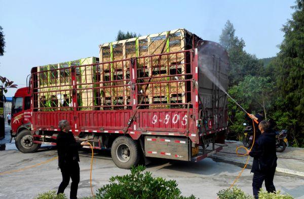 大奖体育农牧引进四川首批美国纯种猪