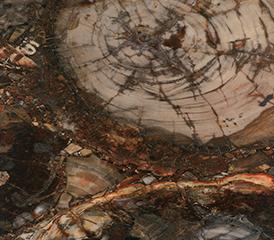 木化石SD3611