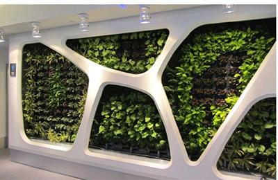 关于室内垂直绿化的养护及养殖条件