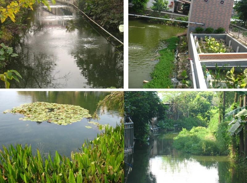 水生态原位修复
