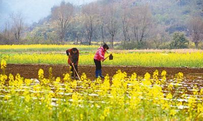 所有肥料知识汇总,春耕备肥怎能少了它