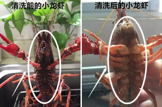 超声波清洗机真的能洗出小龙虾寄生虫吗?