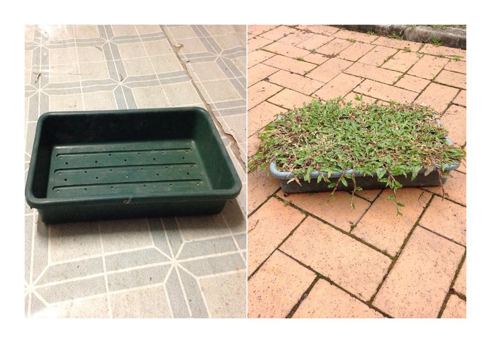 花米板(草皮種植盆)