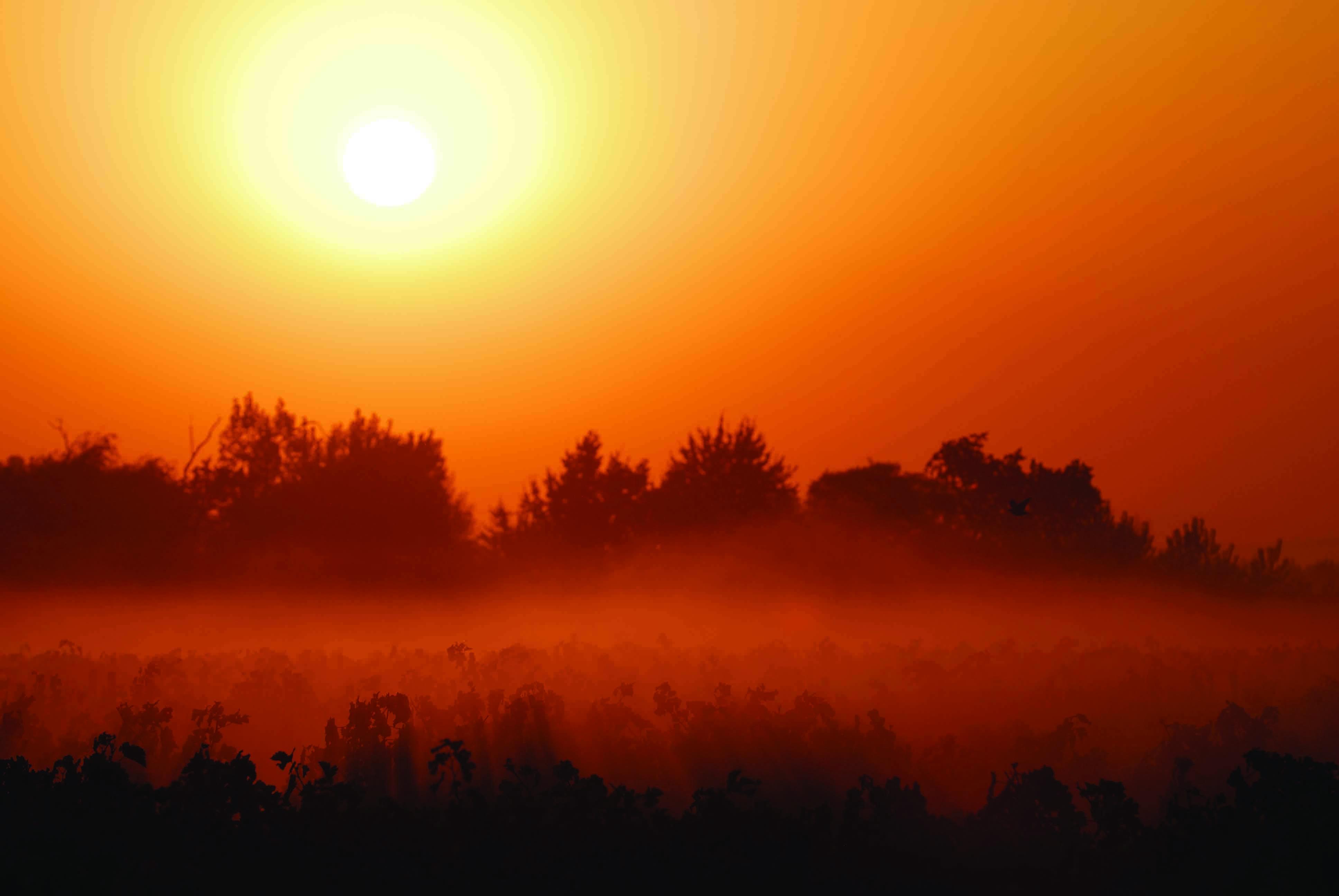 安第斯太阳,冉冉升起的智利新星