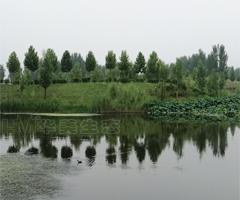 湿地雷竞技app下载官网综合治理工程