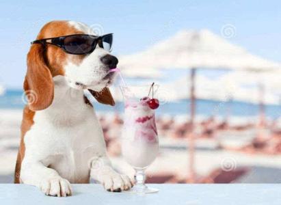 夏天托运宠物需要注意什么?