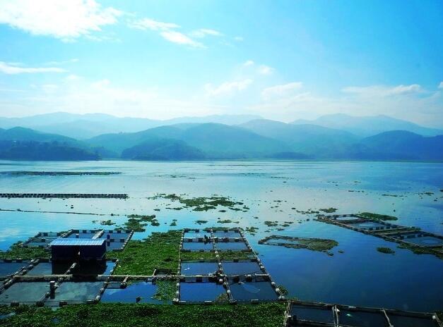 铜/碳-核/壳结构复合材料在水藻防治中的应用——网箱养殖业专用网衣片