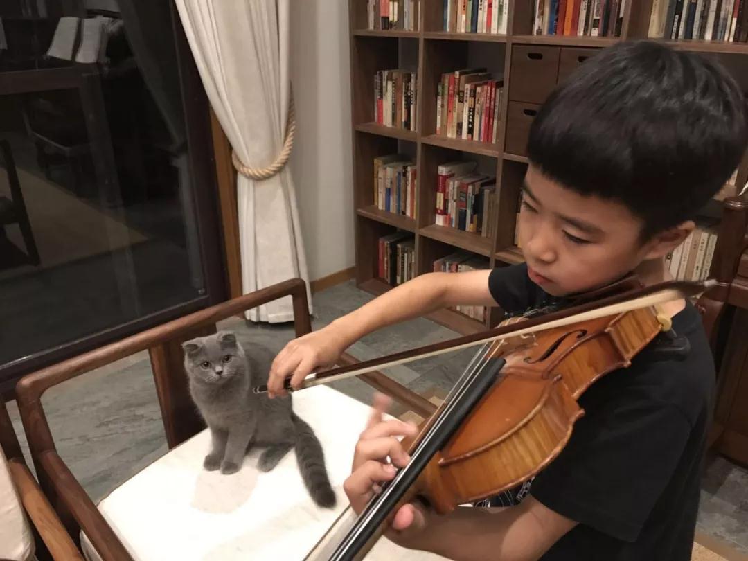 首席猫学琴成长故事:音乐和猫,他的生活温度