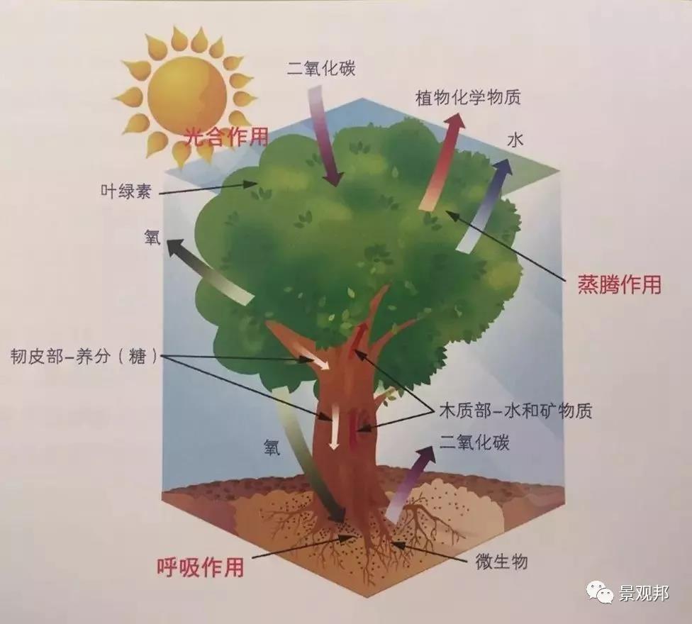 别墅庭院设计之植物也有风水