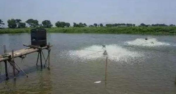 水產養殖高溫疾病管控