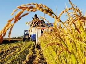 農業產業化加快轉型升級 發揮鄉村產業領頭雁作用