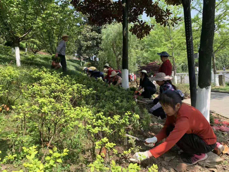 西南政法大学校区园林绿化种植