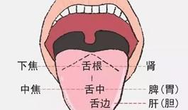 夏天脾胃最为脆弱,如何调养?脾胃好不好看舌头就知道