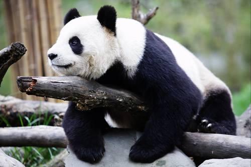 四姑娘山双桥沟/卧龙熊猫苑 2天