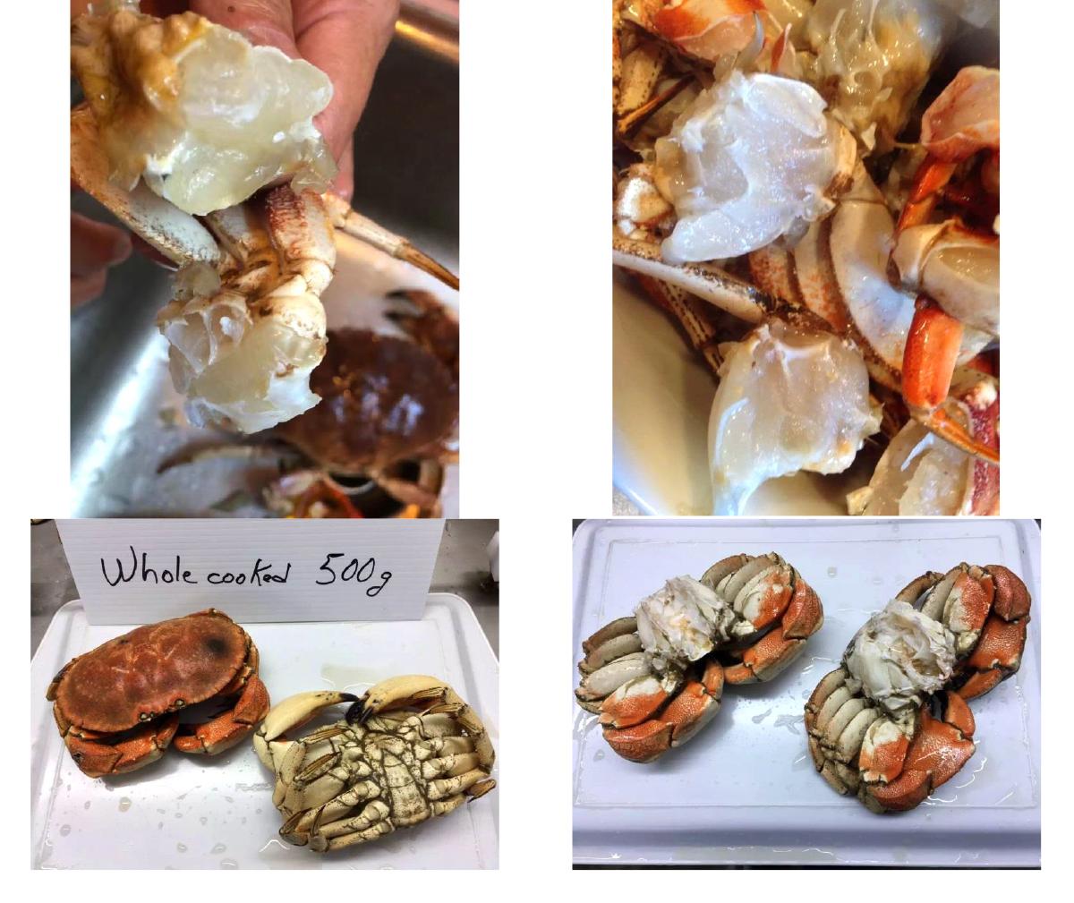 加拿大螃蟹 Jonah Crab