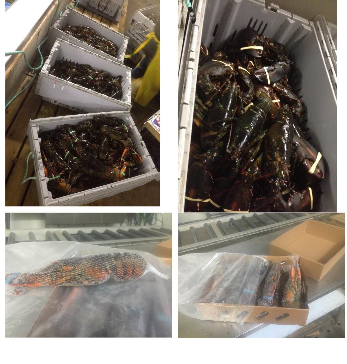 加拿大冰冻龙虾