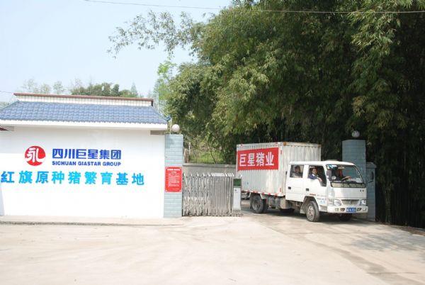 崇州红旗纯种猪场