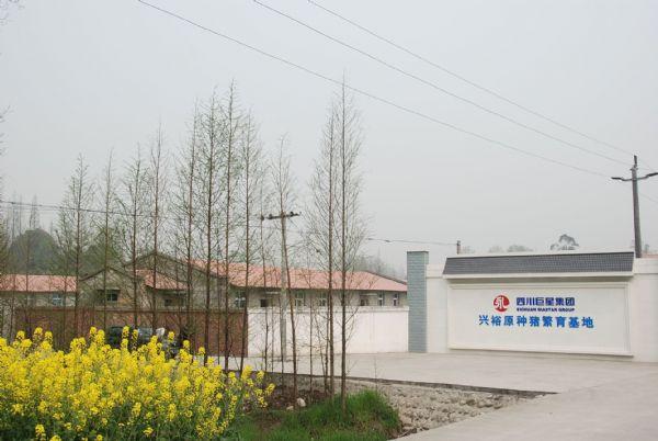 崇州兴裕猪场