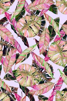 艳彩热带枯枝树叶