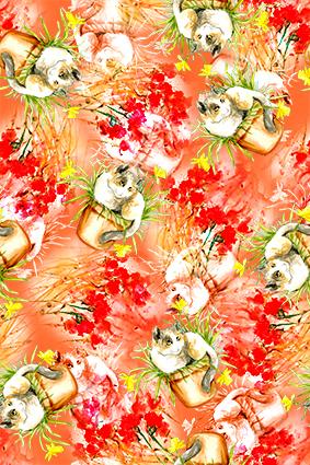 盆菜色彩植物花猫