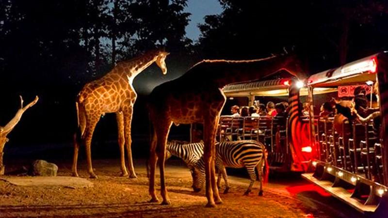上海野生动物园将开放国内首个夜间动物园