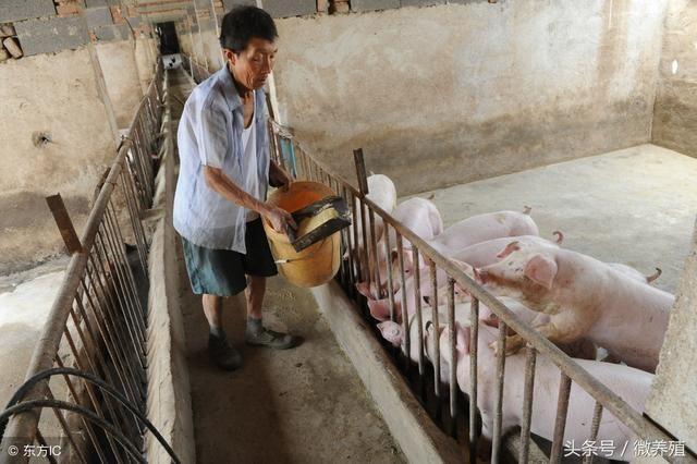 养猪人:近期这两个坏消息需注意,还是小心为妙!