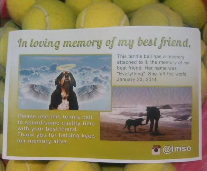 这可能是最暖心的纪念离世狗狗的方式