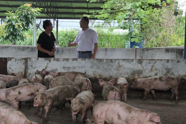 发展养猪产业  助推乡村振兴——泸州、宜宾、广元等地大力推进巨星养猪产业发展模式见成效