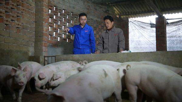 猪价再低我们一起挺——乐山巨星多措并举与养户共渡难关