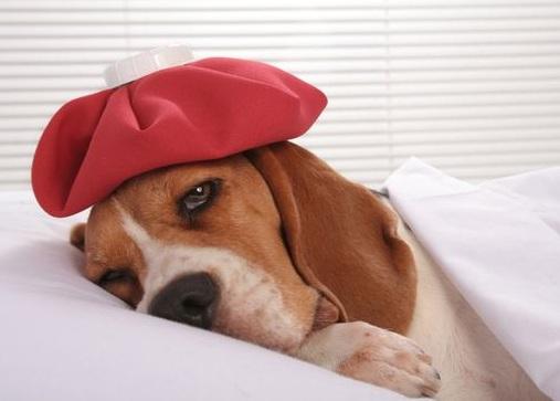 应该怎么照顾老年犬?照顾老年犬应该做到的四点要求