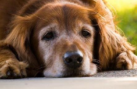 狗狗可以长期吃益生菌吗?
