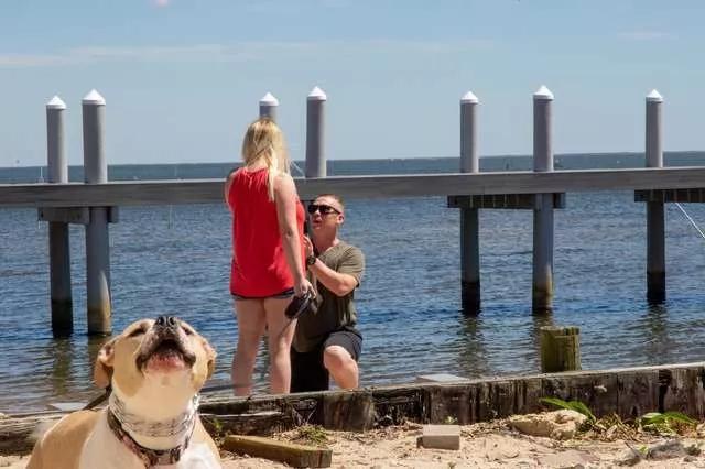 狗子警觉的发现有人偷拍,偷拍的人竟然是...