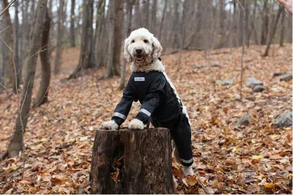 困扰宠物服装届的难题,到底狗子的裤子要怎么穿