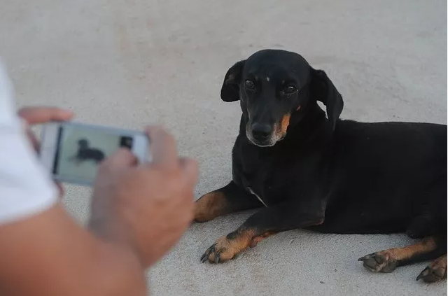 总说爱狗?那看看这10条你中几条?