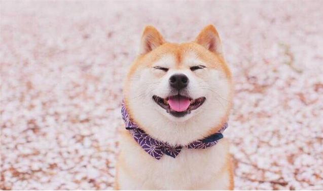 怎么教狗狗笑?