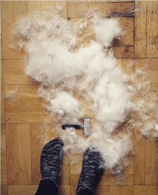 你家狗爱掉毛?这几条你中几条