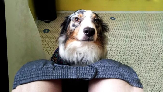 狗狗爱你的8个表现