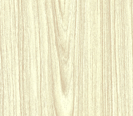 SM1038 American white maple