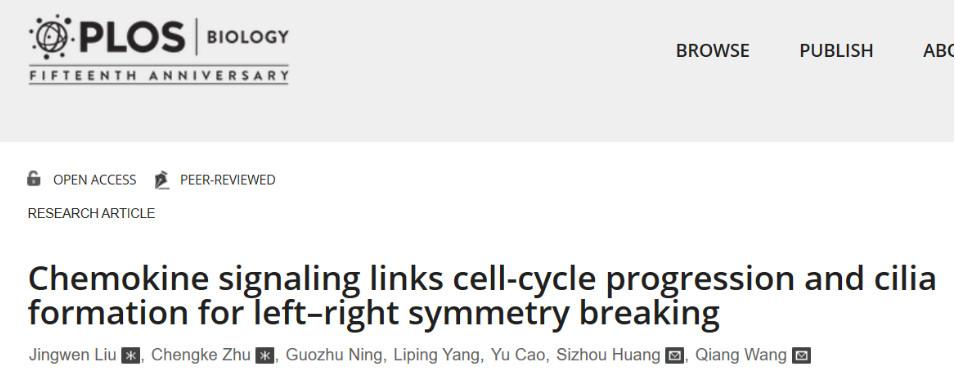 胚胎发育中不对称发育过程细胞周期调控纤毛形成重要机制