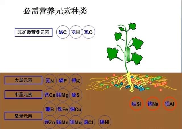 肥料与各元素之间的相互作用