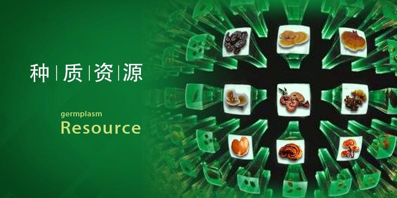 食药用菌种质资源库