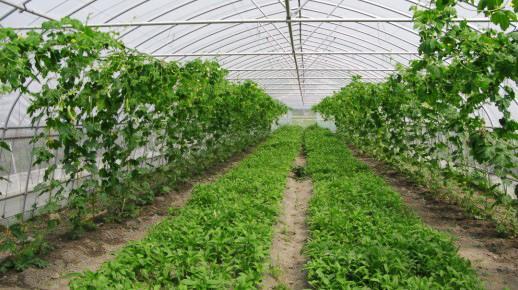 有机肥施用方法