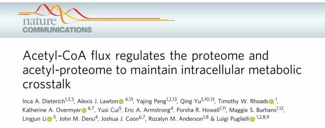 波澜不惊,Nat Commun:乙酰辅酶A维持细胞内代谢稳态的新机制