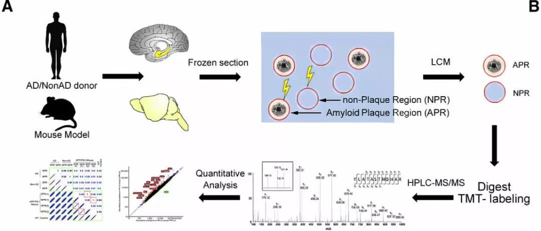 """脑海中的橡皮擦,蛋白质组学让阿尔兹海默症研究""""从容面对""""【景杰精选】第02期"""