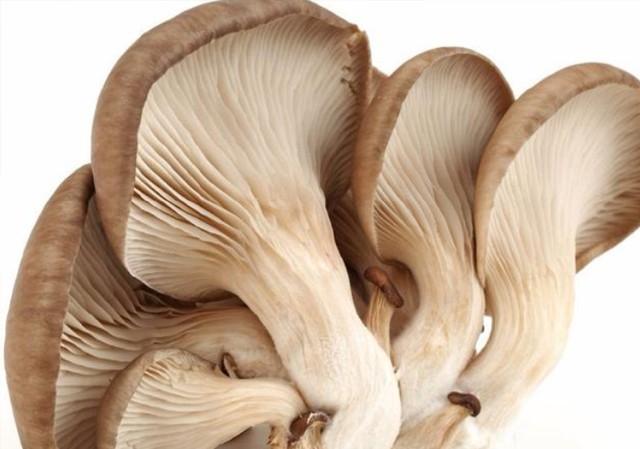 不要再烦菌菇类的选购和处理哦,食谱君教你简单高效的办法