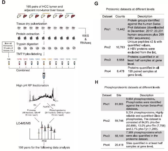 Cell | 樊嘉/周虎/高大明团队合作报道HBV相关肝癌蛋白基因组最新研究