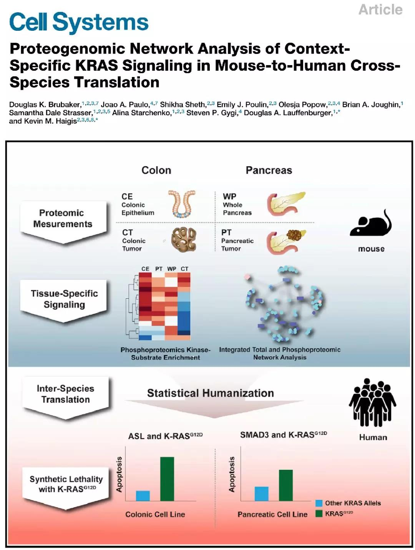 """""""橘生淮北则为枳"""",磷酸化修饰组学揭示KRAS基因突变在结肠癌及胰腺癌中的不同调控机制"""