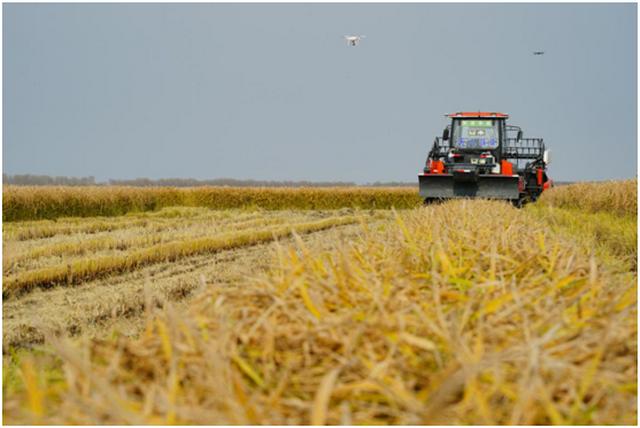 """碧桂园现代农业再创""""里程碑"""" 全球首个超万亩无人化农场试验示范项目展示最新成果"""