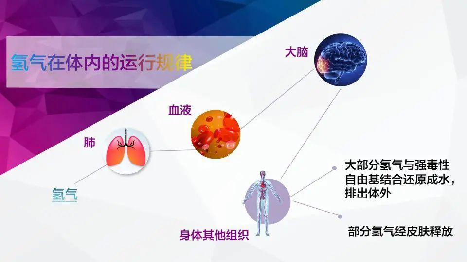 氢分子生物医学