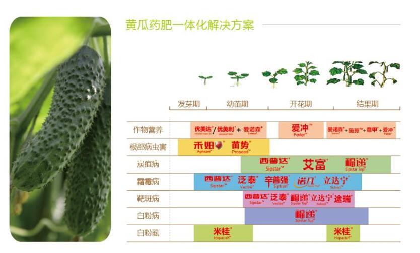 黄瓜药肥一体化解决方案